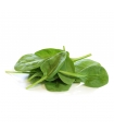 Baby Spinach Leaves 小菠菜 (120g)